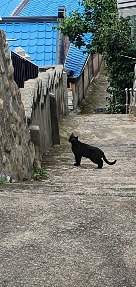 Black cat next to a stone wall