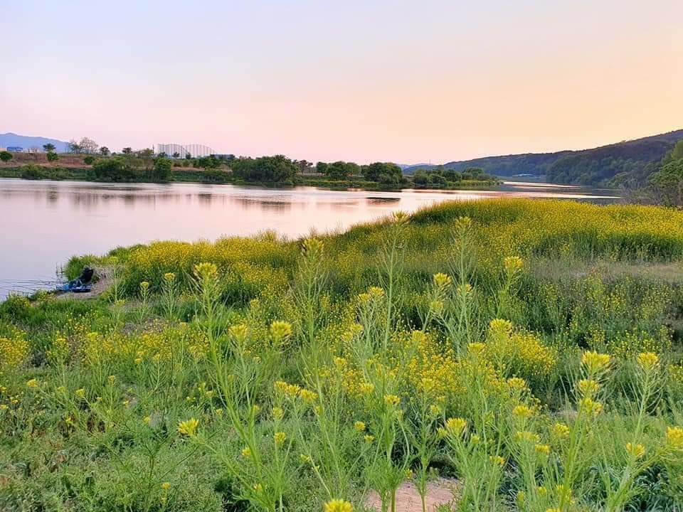 Yellow flowers in the foreground with a lake and sky in the background